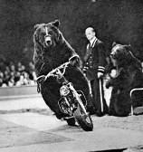 Дрессированный медведь на мотоцикле