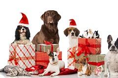 Собаки с подарками