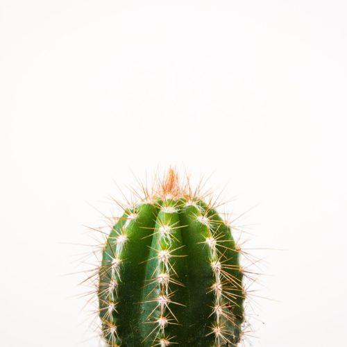 Самодисциплина: съешь свой кактус