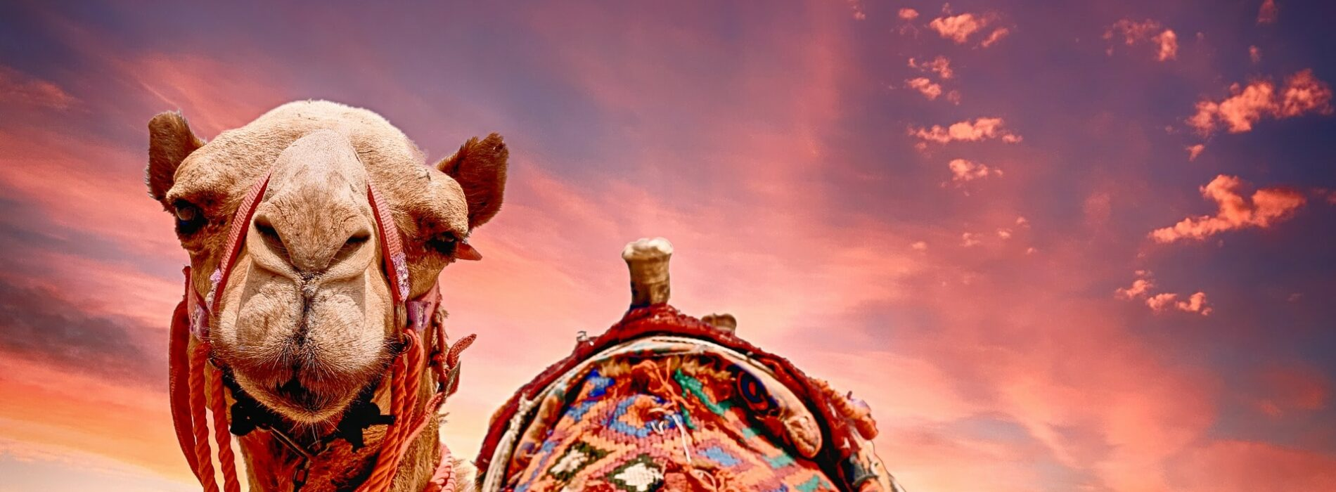 О Личностном росте, уровне Бытия и о том, как Верблюд стал Человеком