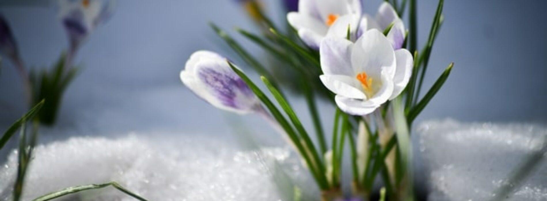 Декабрьская весна