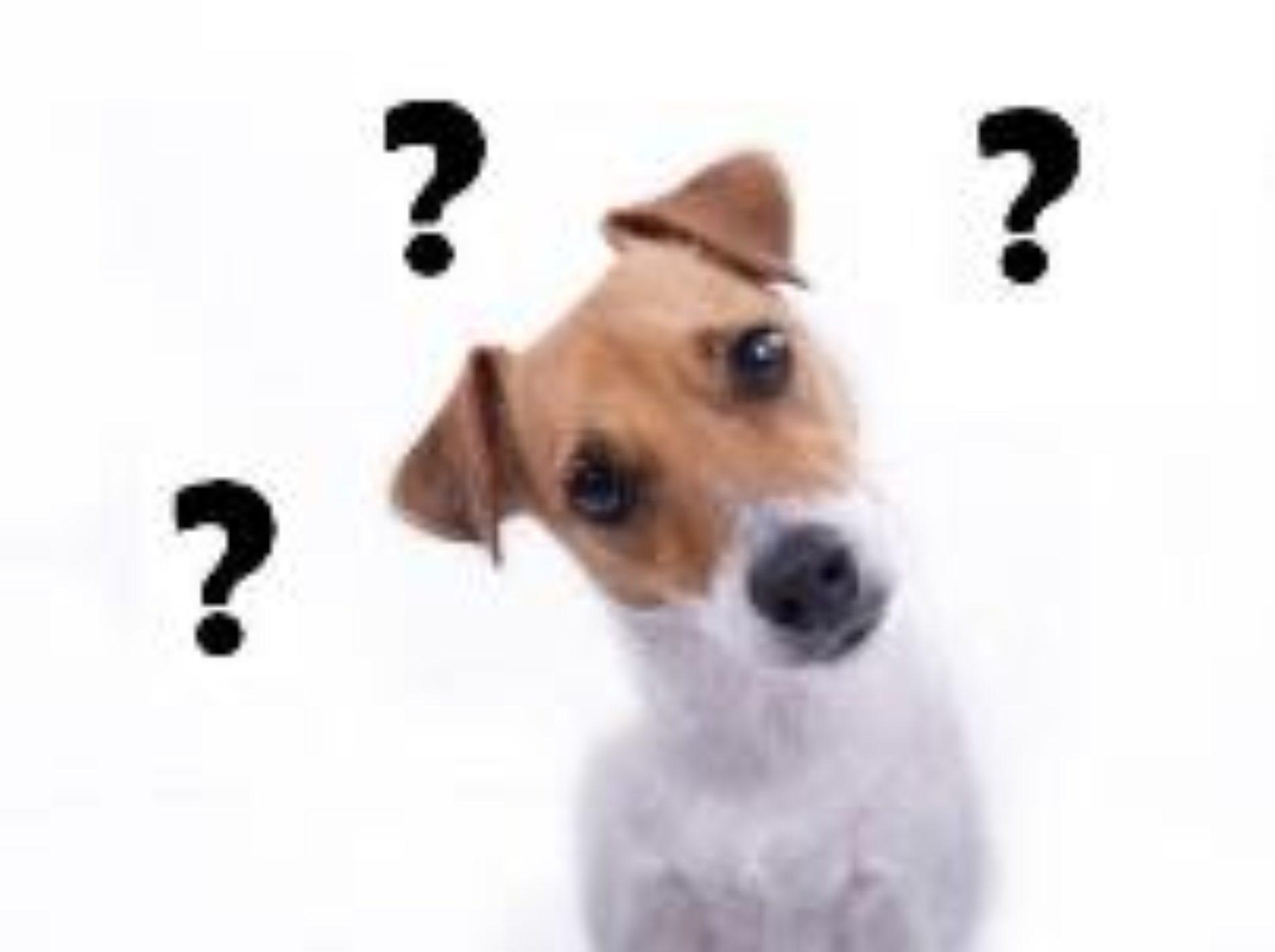 Вопросы «на засыпку» для переговорщика