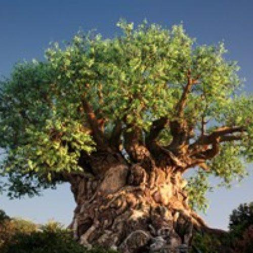 Переговоры: дерево целей