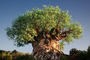 деревья гиганты фото
