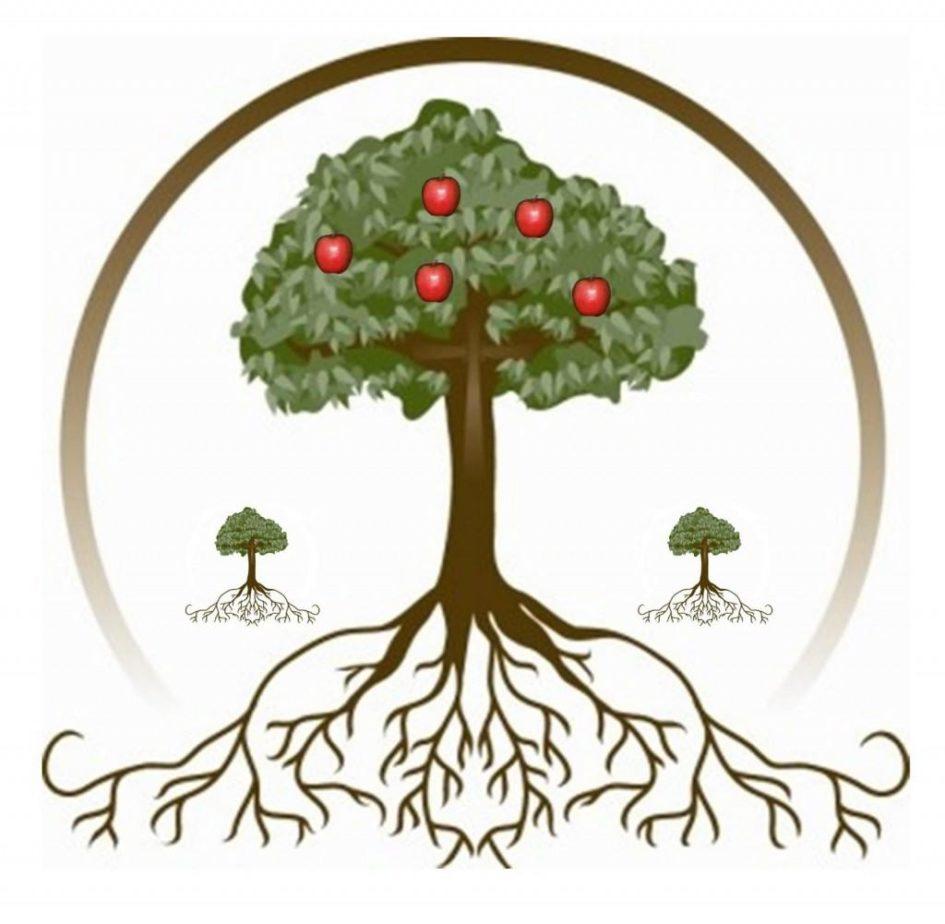 яблоня плодовое дерево
