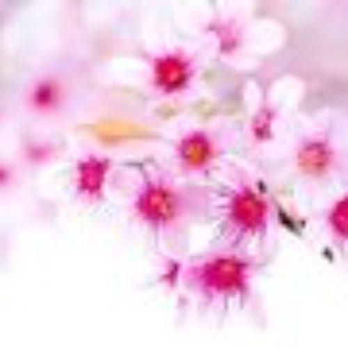 Весна превращает сны в сновидения