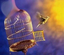 птица клетка полет