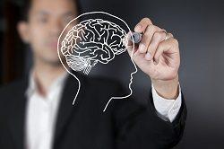 рисунок головного мозга человека