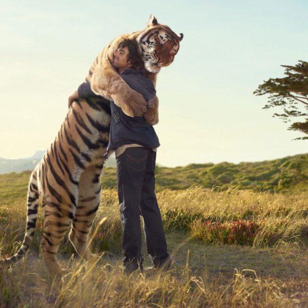 в объятиях тигра