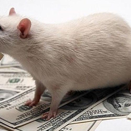 Сказка об Алёшеньке, крысе в переговорах и хвосте дракона