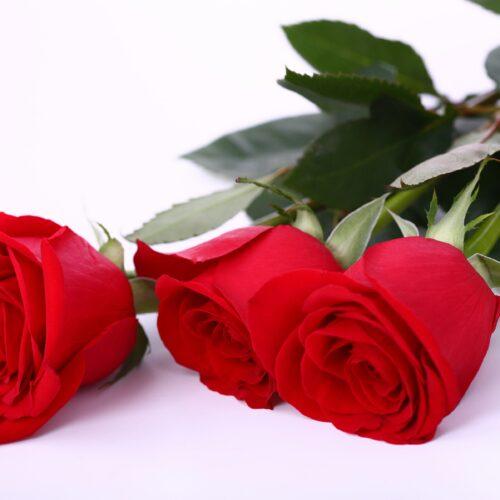 Мудрость Любви и 8 марта
